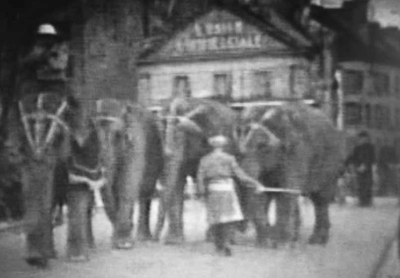 Groupe d'éléphants et leurs cornacs fermant la parade